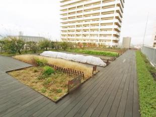 ●屋上には共有で楽しめる菜園